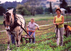 Windborne Farm