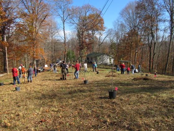 Woodland tree planting 2012