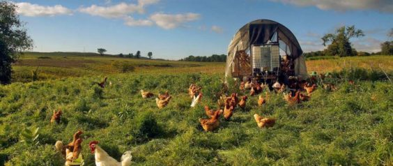 NY Legislature Approves Working Farm Protection Act