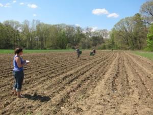 Northampton Community Farm