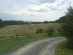 Farm Affordability Program Has Successful Harvest