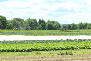 Hearty Roots Community Farm
